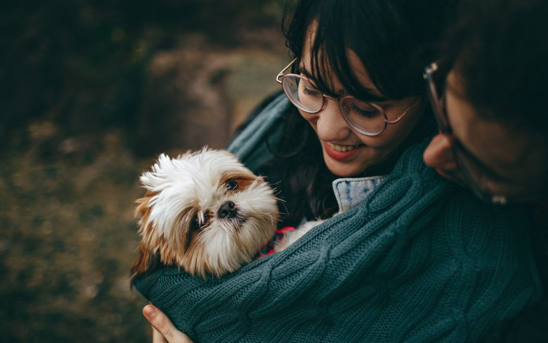 6 Tips To Be A Responsible Dog Owner